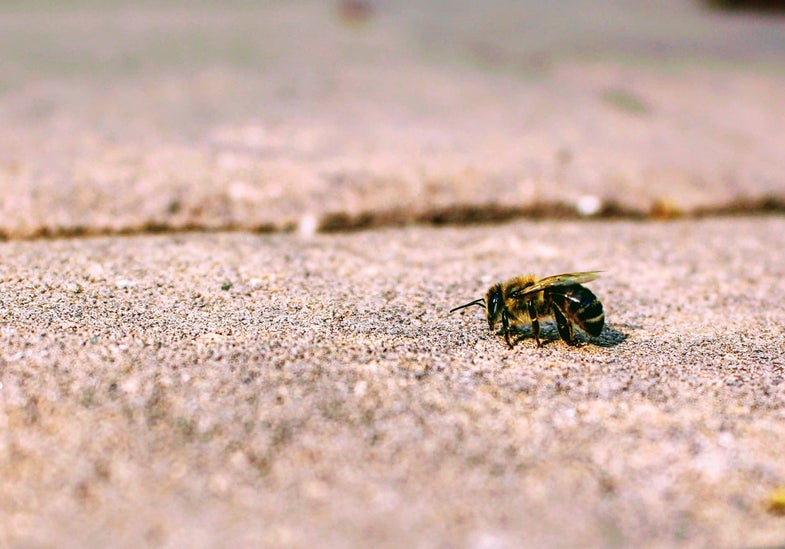 Pesticides are making bees dumber