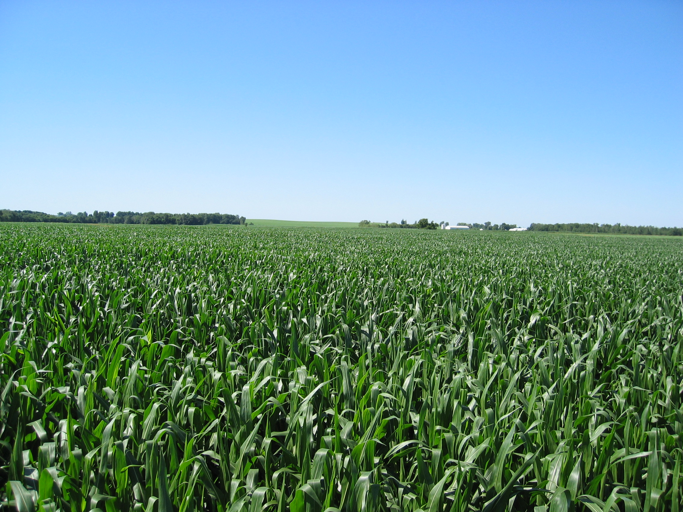 Want Your Crops To Survive Extreme Heat and Drought? Add Fungus