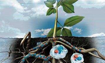 Environmental Visionaries: The Diaper Farmer