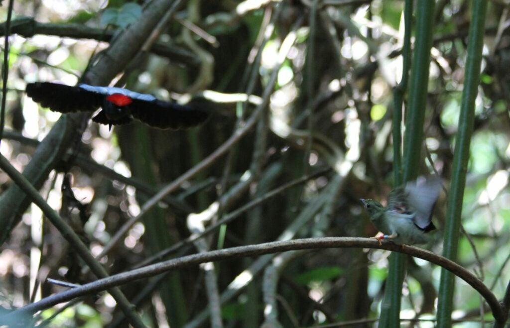 a dancing bird