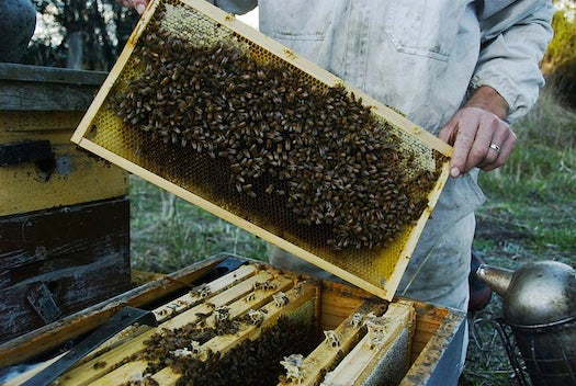 Obama Starts Task Force To Prevent Bee Deaths