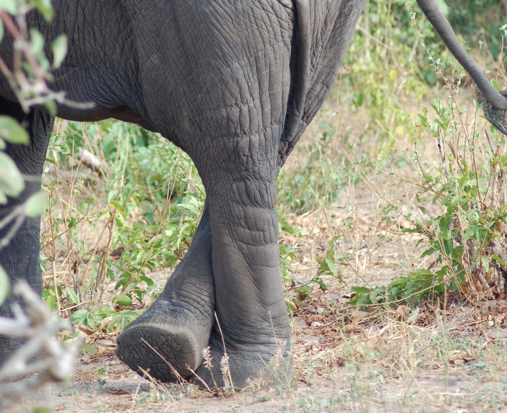 How Fast Does An Elephant Pee?