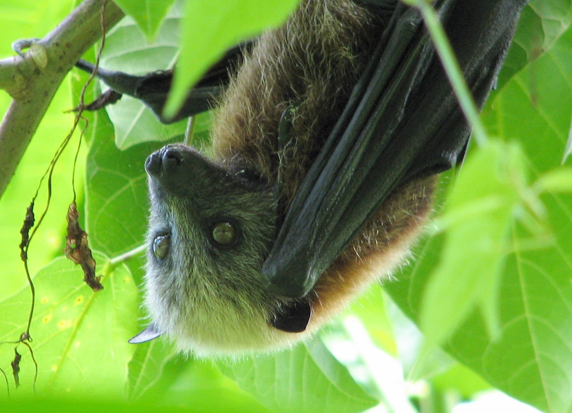 Check Out This Curly Protein From The Deadly Nipah Virus