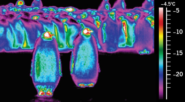 What A Penguin Looks Like On A Heat Map
