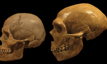 Our Neanderthal DNA May Help Scientists Understand Depression And Addiction