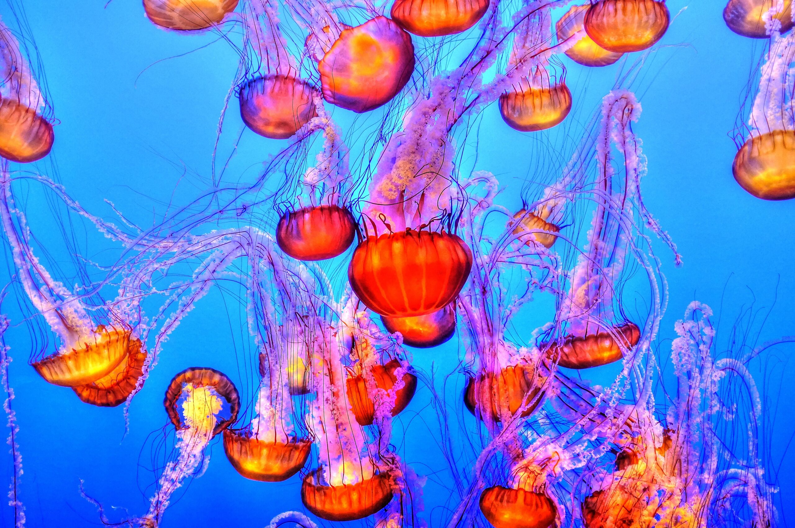 You're treating jellyfish stings all wrong