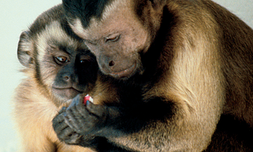 Lean on Me (Or at Least a Monkey)
