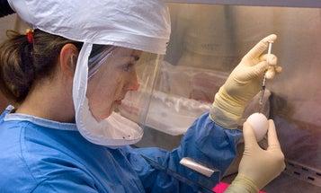 Scientists To Make Deadlier Versions Of H7N9 Bird Flu In Lab