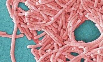 Better Know A Plague: Legionnaires' Disease