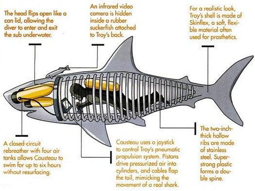 Trojan Shark, June 2005