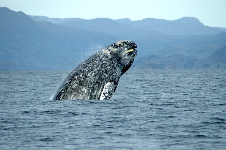A new study on whales suggests Darwin didn't quite get it right