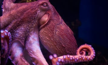 These creatures are smart, playful, and incredibly alien