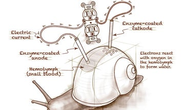 """Rough Sketch: """"A Snail Could Be Used as a Battery"""""""