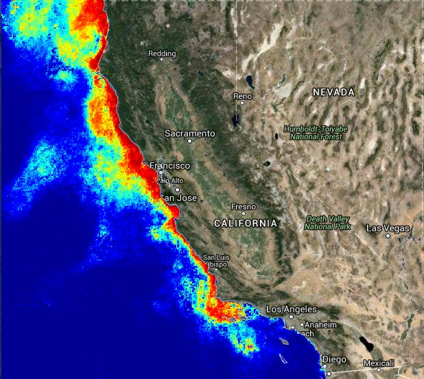 'Unprecedented' Toxic Algal Blooms Off West Coast Hurt Sea Lions, Contaminate Sea Food