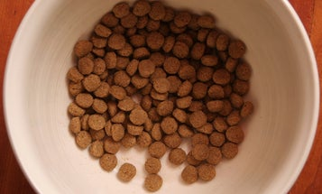 What's In Your Dog's Dinner?