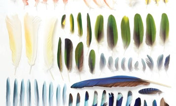 Organizing the natural world by color makes for some seriously satisfying photos