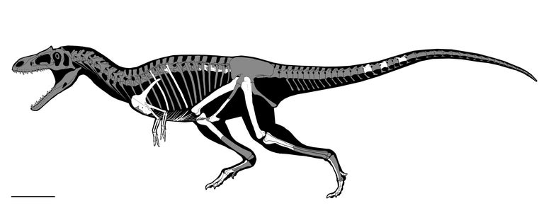 An artist's drawing of the anatomy of *Gualicho shinyae*.