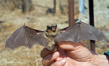 Hurricane Harvey's putting bats at risk—but help is on the way
