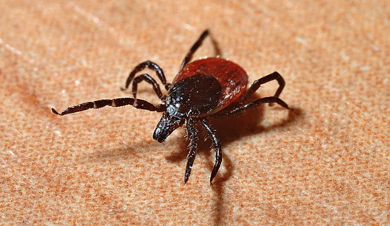 Lyme disease is thriving thanks to climate change