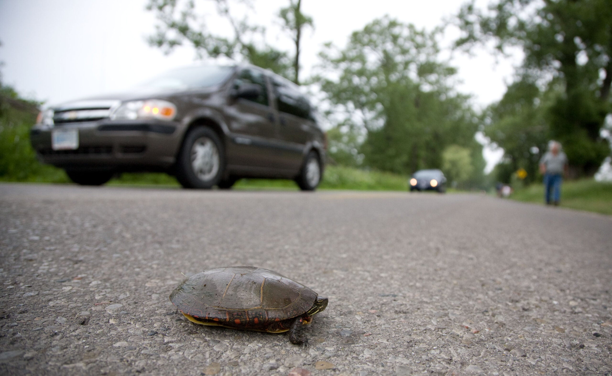 How one community rallied to save turtles from becoming roadkill
