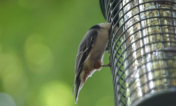 Bird Feeders and Overeaters