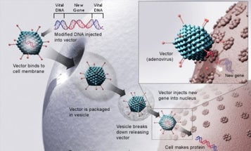 The West's First Gene Therapy Goes On Sale Mid-2013