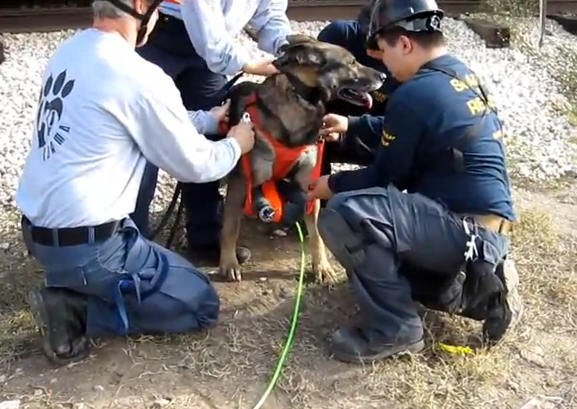 Video: Rescuing Disaster Victims With Snake Robots Deployed By Dogs