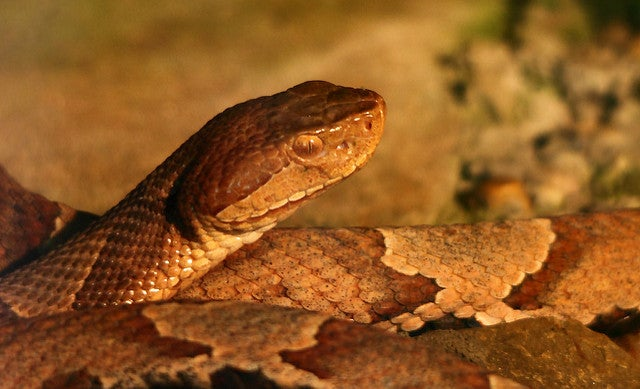 Rising temperatures are opening new territories for venomous creatures—including your backyard