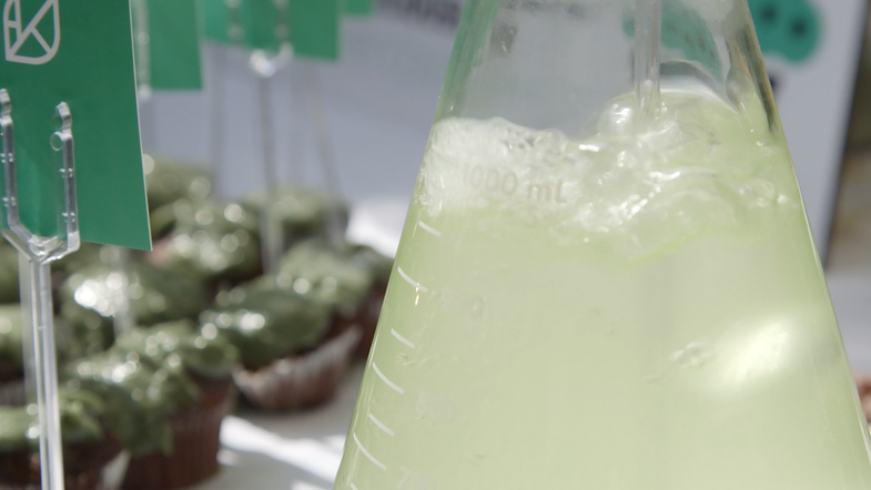 This Startup Wants to Feed the World–With Algae