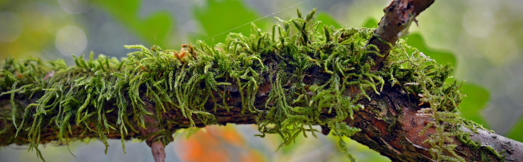 Scientists want YOU to help them study amphibious lil plants