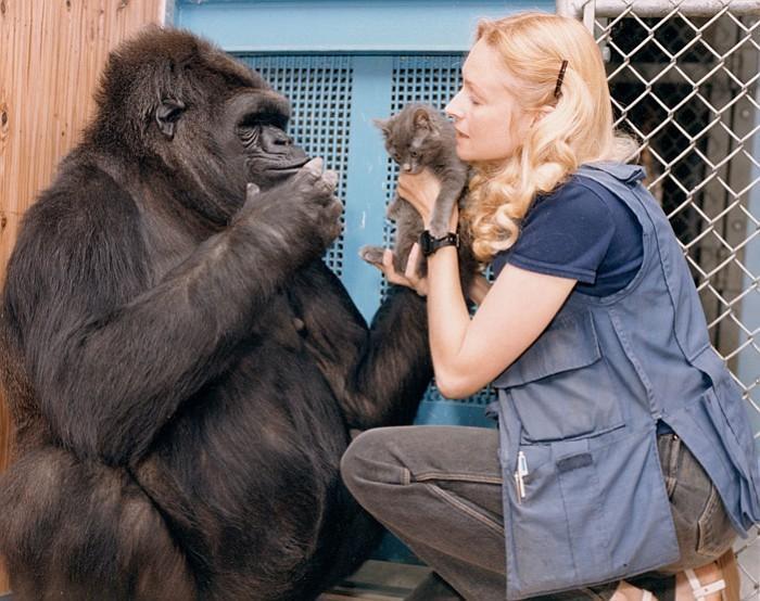 Koko, the beloved gorilla who communicated through sign-language, dies at age 46