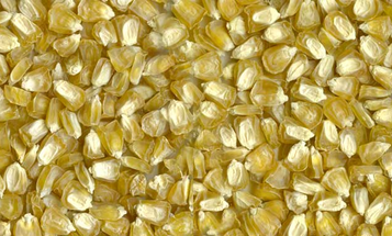Another Chinese National Indicted For Stealing American GMO Corn