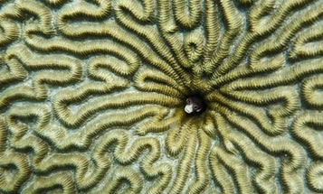 8 Of The Year's Most Oddly Gorgeous Science Images