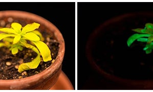 Glowing Plants Now Up For Auction