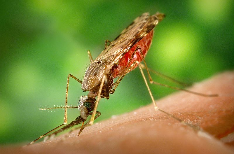 """Malaria"