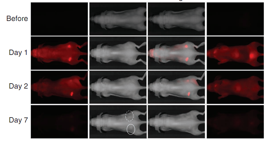 Using Light to Target and Kill Cancer Cells, Without Chemotherapy's Side Effects