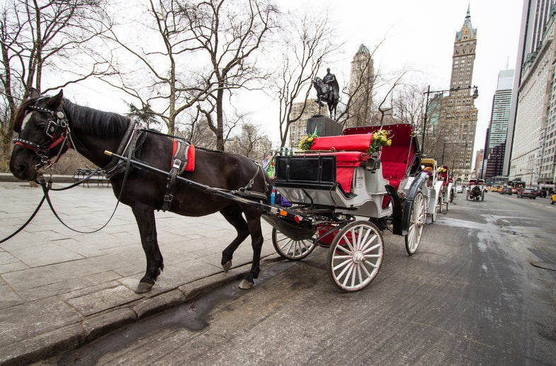New York City's Carriage Horses May Soon Get Microchip Implants