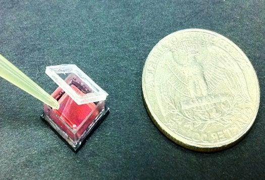 Video: Smart Petri Dish Images Cells Using a Smartphone Camera and Legos