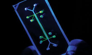 This Lung-On-A-Chip Is The First Lab-Ready Mini-Organ to Be Used in Drug Research