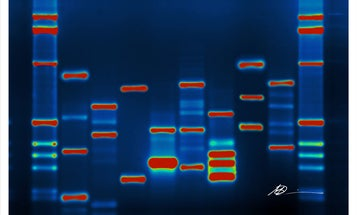 Everything You Need to Know About Precision Medicine