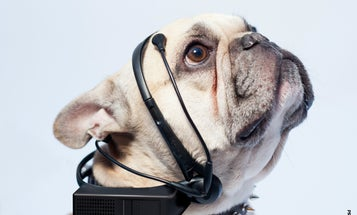 This Dog Thought-To-Speech Translator Is Bogus