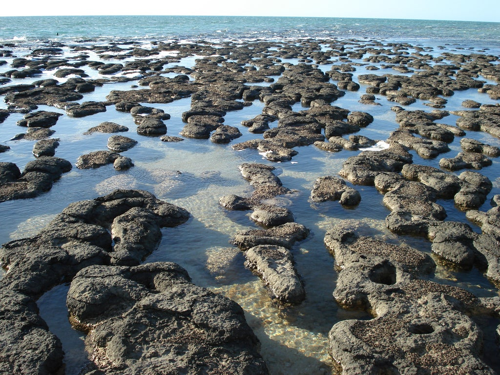 Coastal scene with stromatolites