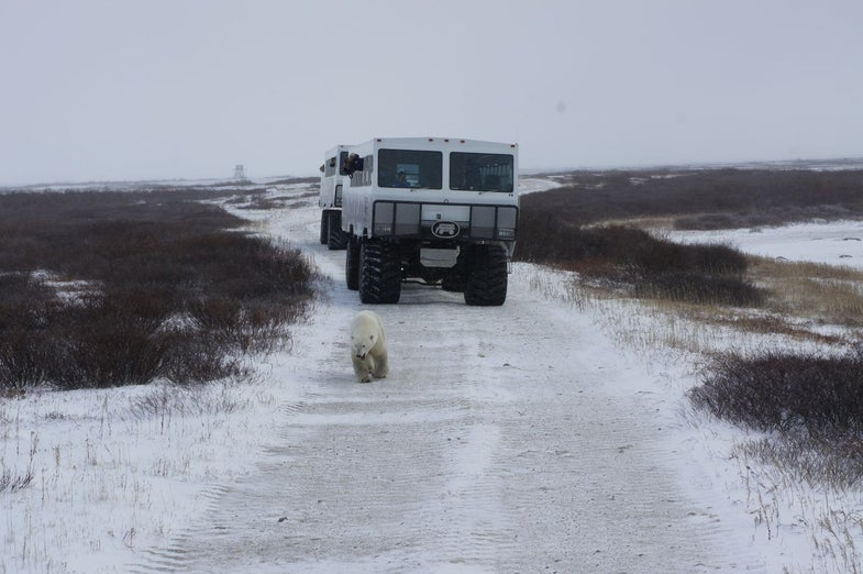 Exclusive: Inside Google's Quest To Bring Polar Bears To You