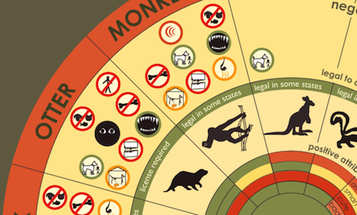 The Wheel Of Exotic Pets [Infographic]
