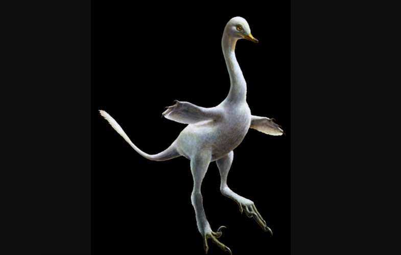 Reconstruction of the amphibious bird-like dinosaur Halszkaraptor