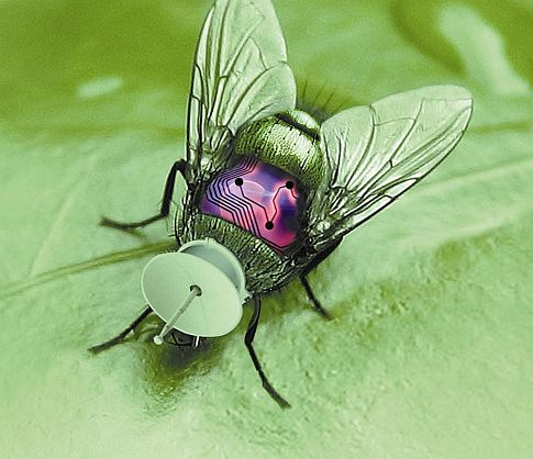 Network of Wi-Fi-Enabled Cyborg Insects Hunts Down WMDs