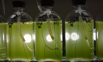 Enzyme Could Let Any Plant Produce Fuel