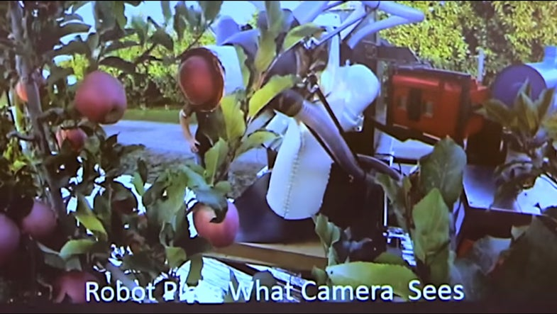 Apple-Plucking Robot Could Keep People Out Of Orchards