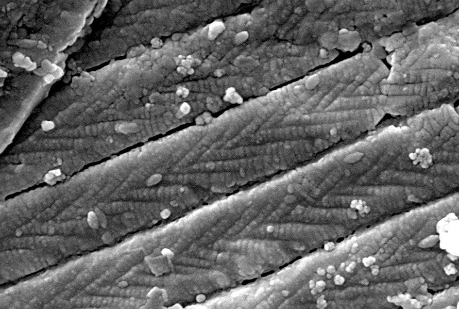 nanostructure of a wing
