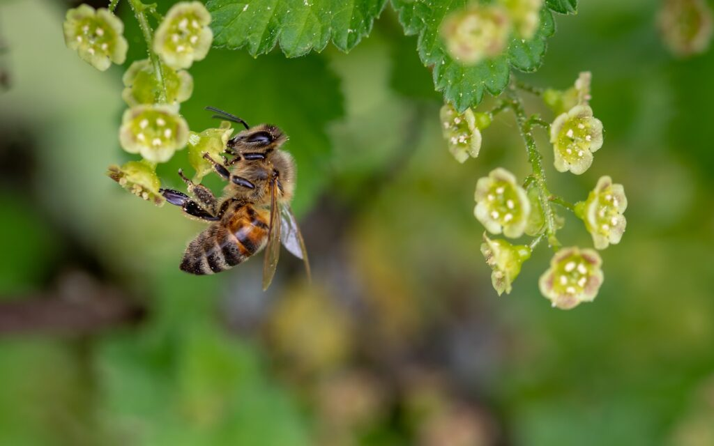 A bee pollinating.